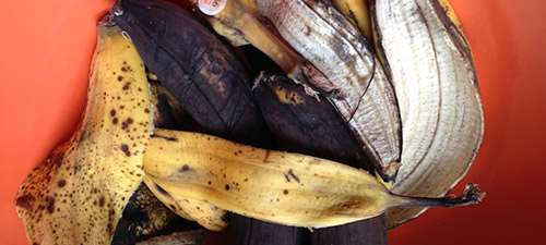 Удобрение банановыми шкурками